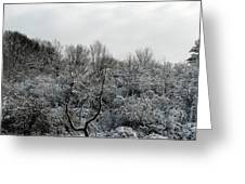 Snow Covered Trees Greeting Card by Rose Santuci-Sofranko