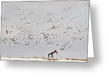 Snow Geese Over Oil Pump 01 Greeting Card by Rob Graham
