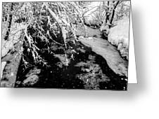 Snow Pa 10-013 Greeting Card