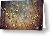 Snowfall On Budding Willows Greeting Card by Laura Roberts