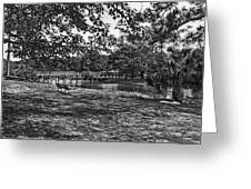 Solitude In Black And White Greeting Card