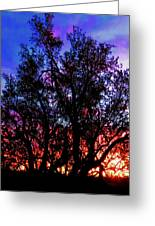 Sonoran Sunrise Ironwood Silhouette Greeting Card