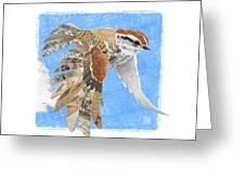 Sparrow Greeting Card by Clint Hansen