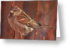 Sparrow In The Sunshine Greeting Card