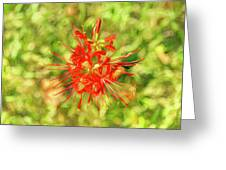 Spider Lily Pop Greeting Card