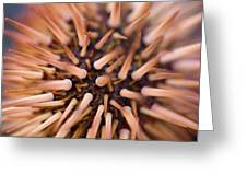 Spiny Urchin Greeting Card