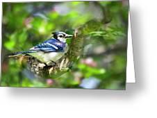 Spring Blue Jay Greeting Card