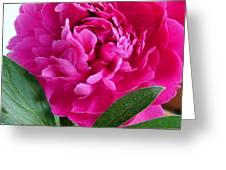 Spring Dahlia Greeting Card