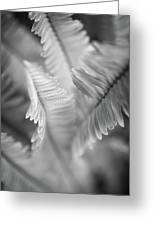 Spring Fern Macro In Black And White Greeting Card
