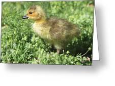 Spring Gosling Greeting Card