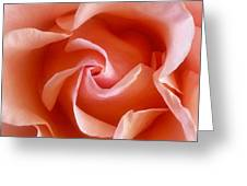Spring Rose Greeting Card
