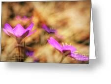 Spring Wild Flower 4 Greeting Card
