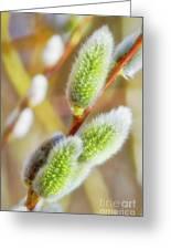 Spring Willow 4 Greeting Card