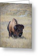 Standing Bull Greeting Card