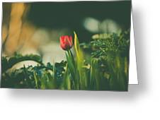 Start Of Spring Greeting Card by Dheeraj Mutha