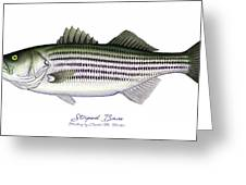 Striped Bass Greeting Card