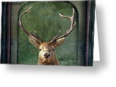 Stuffed And Mounted Greeting Card