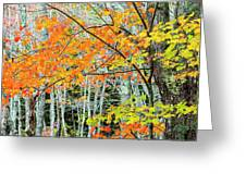 Sugar Maple Acer Saccharum In Autumn Greeting Card