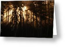 Sultry Morning Radiance Greeting Card