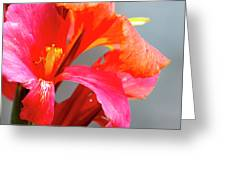 Summer Lilly Pink Greeting Card