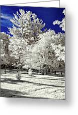 Summer Park In Infrared Greeting Card