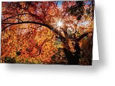 Sun Peaking Through The Autumn Colors  Greeting Card