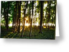 Sun Slivers Greeting Card