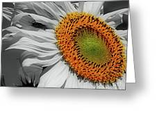 Sunflower And Shy Friend Greeting Card