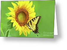 Sunflower And Swallowtail Greeting Card