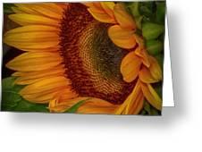 Sunflower Beauty Greeting Card by Judy Hall-Folde
