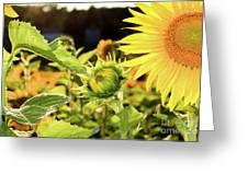 Sunflower Bloom Greeting Card