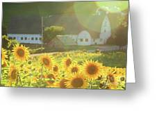 Sunflower Haze Greeting Card