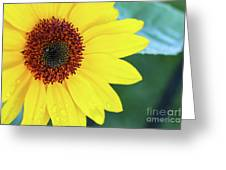 Sunflower- Shine On Me Greeting Card