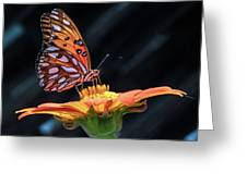 Sunlit Gulf Fritillary Butterfly Greeting Card