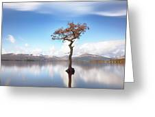 Sunny Afternoon On Loch Lomond Greeting Card