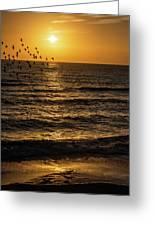 Sunrise Birds Nc Greeting Card