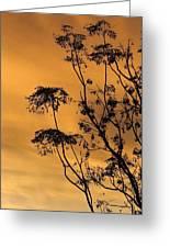 Sunrise Silhouette Greeting Card