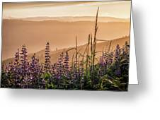 Sunset Among The Lupine Greeting Card by Laura Roberts