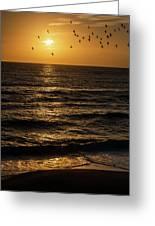 Sunrise Birds North Carolina Greeting Card
