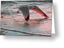 Sunset Glide Greeting Card