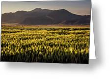 Sunset Over Wheat Greeting Card