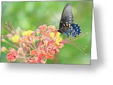 Swallowtail Butterfly Wings  Greeting Card