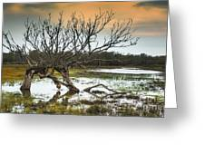 Swamp And Dead Tree Greeting Card