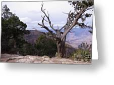 Swirly Tree Greeting Card