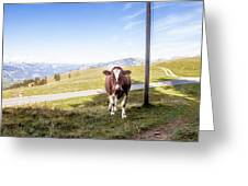 Swiss Cow Greeting Card