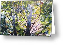 Sycamore Inspiration Greeting Card