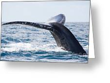 Tail Of Whalewhale Show The Tail Above Greeting Card
