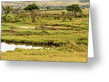 Tanzania Animal Landscape Greeting Card
