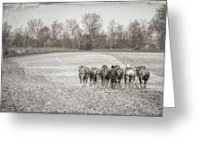 Team Of Six Horses Tilling The Fields Greeting Card