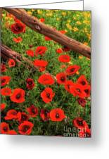 Texas Hill Country Wildflowers Greeting Card